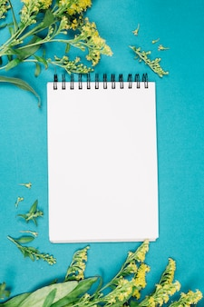 Yellow goldenrods or solidago gigantea flowers near the blank white spiral notepad on blue backdrop
