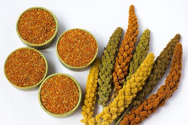 기장의 노란색, 녹색 및 빨간색 귀. 곡물 기장.