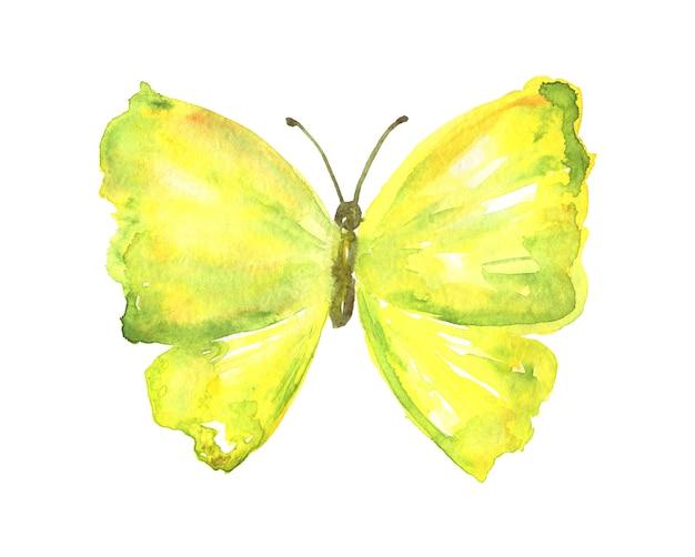 黄緑色の蝶。手描きの水彩イラスト。孤立。