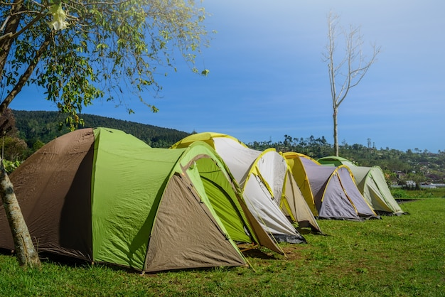 Yellow and green camping tent on grass near mountain river in morning the summer day.