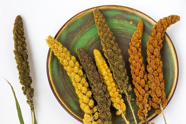 Yellow and green ears of millet on a green plate.. top view
