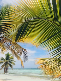 Yellow and green leaves of palm on golden beach