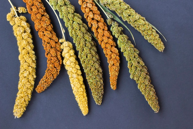 Yellow, green and red ears of millet. black table