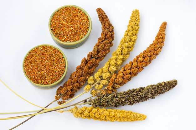 Yellow, green and red ears of millet. grain millet.