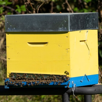 Желтый улей с пчелами во франции