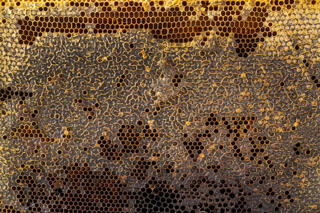Yellow honeycomb texture