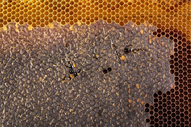 Struttura gialla a nido d'ape