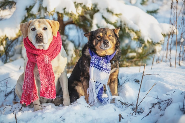 노란색 래브라도 리트리버 강아지와 겨울에 눈 덮인 숲에 야외에서 함께 앉아 갈색 검은 개. 니트 스카프를 착용하는 개
