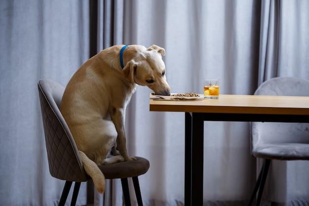Желтый лабрадор-ретривер позирует, сидя за столом с вкусностями. корм для собак в белой тарелке