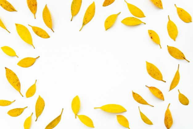 Yellow leaf background.creative autumn pattern of yellow and orange leaves on white backgr