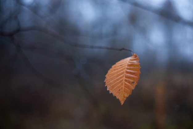 Yellow leaf hanging on the branch of the tree with foggy background of late autumn