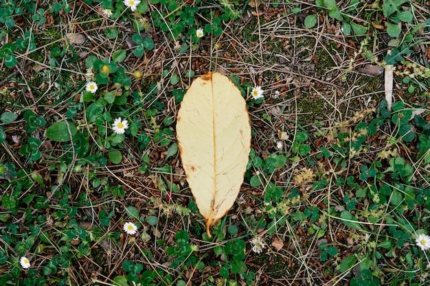 흰색 데이지 중 잔디에 노란 잎 거짓말