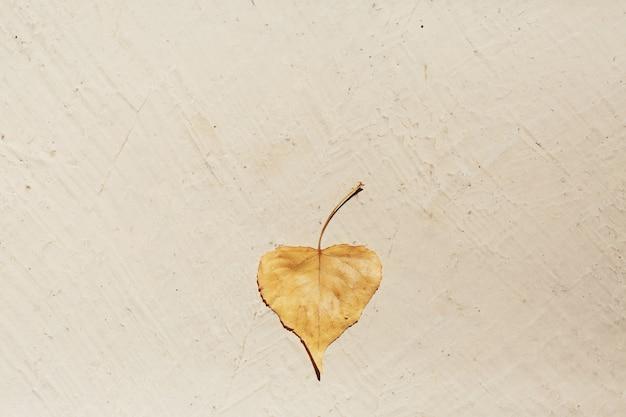 Желтый лист лежит на земле в ярком солнечном свете