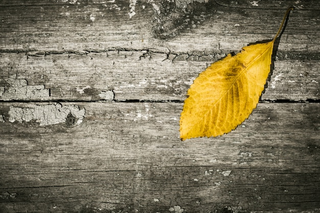 Yellow leaf on an old painted wooden surface