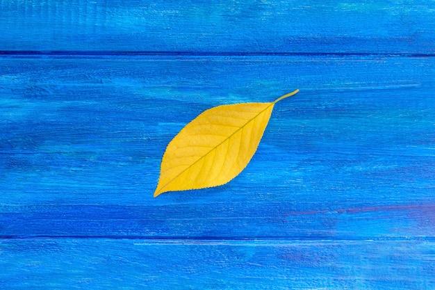 파란색 바탕에 노란색 잎입니다. 가을 개념. 확대