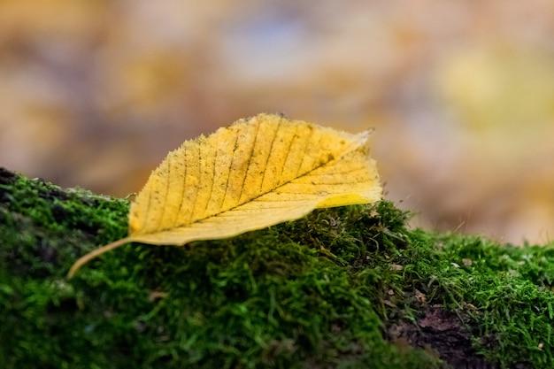 ぼやけた背景の緑の苔の黄色の葉