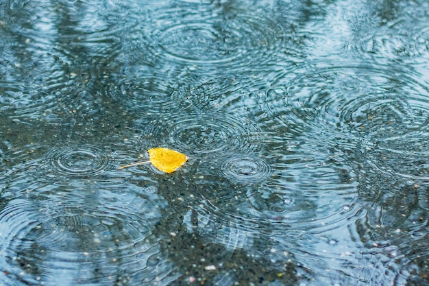 Yellow leaf in the puddle during the rain on the autumn day