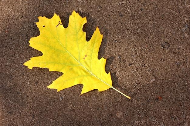 黄色の葉の木