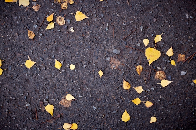 Yellow leaves on asphalt and puddles. background of dark blue pavement