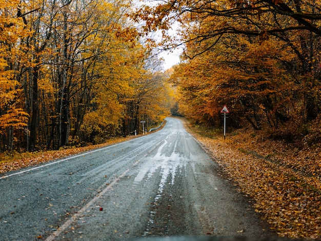 Yellow leaves autumn forest nature fresh air tall trees road track