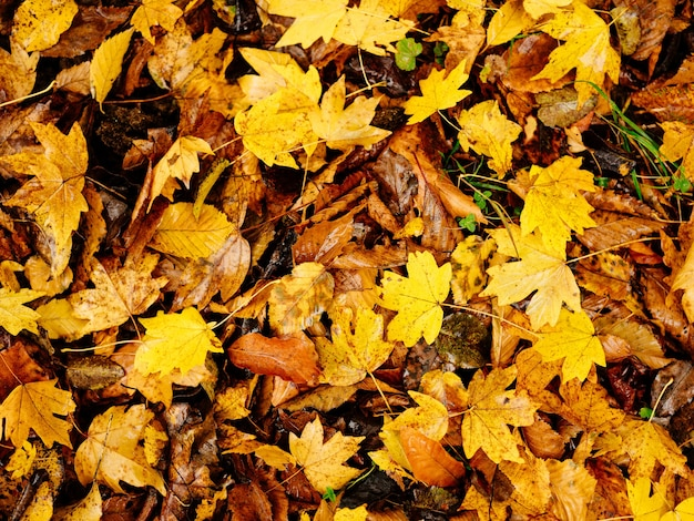 Yellow leaves autumn top view nature fresh air travel
