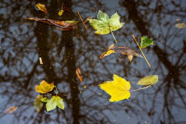 Желтые листья плавают в луже во время дождя осенью