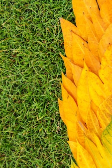 Yellow leaves on green grass background and pattern