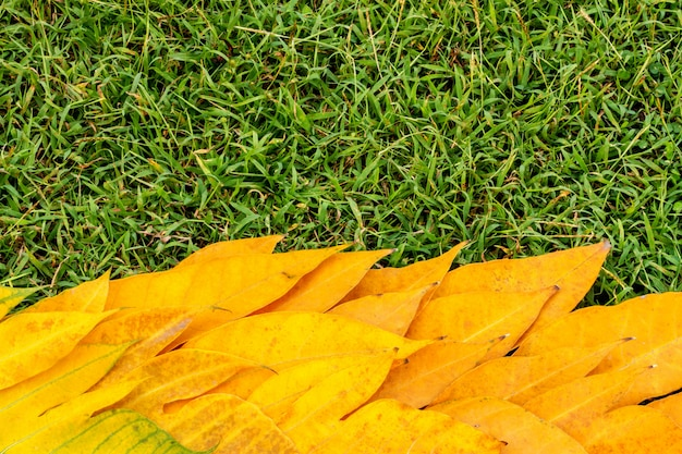 Yellow leaves on green grass background vintage