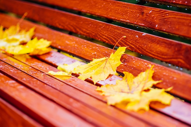 Yellow leaves lie on the bench in the park