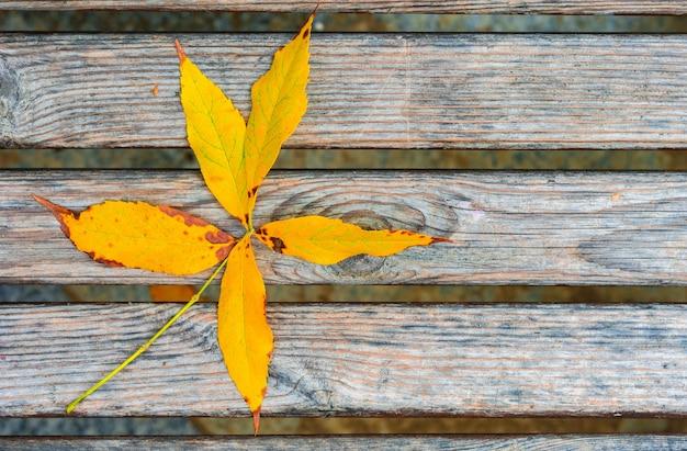 벤치에 노란 잎