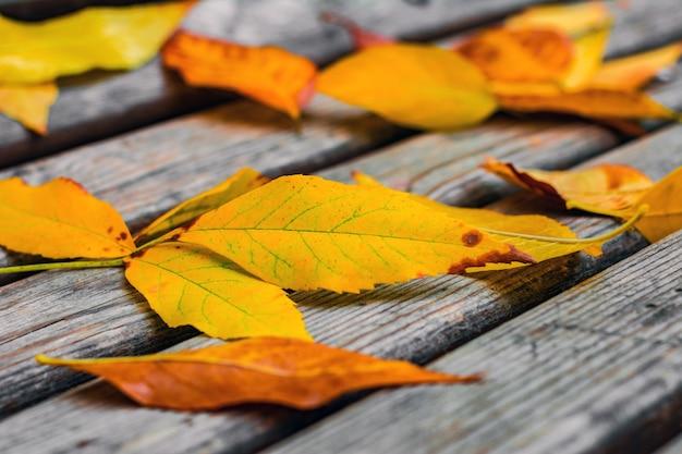 벤치에 노란 잎 프리미엄 사진