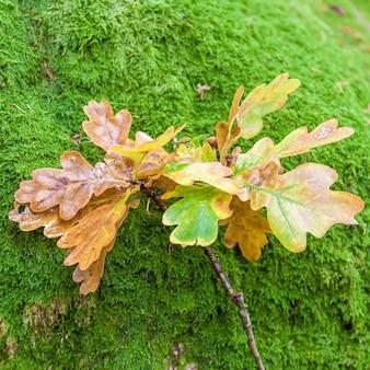 녹색 이끼에 노란 잎