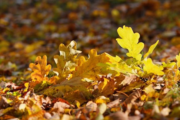 «желтые листья на земле»