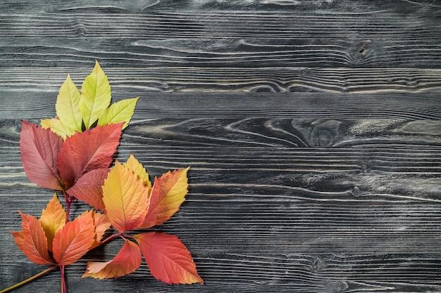 나무 표면에 노란 잎 프리미엄 사진