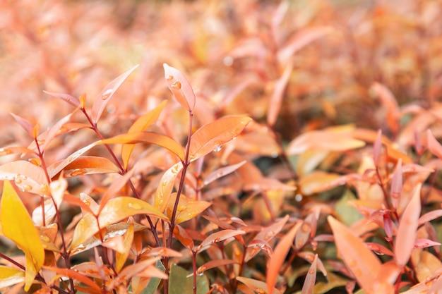 雨水滴と黄色の葉のテクスチャ背景紅葉