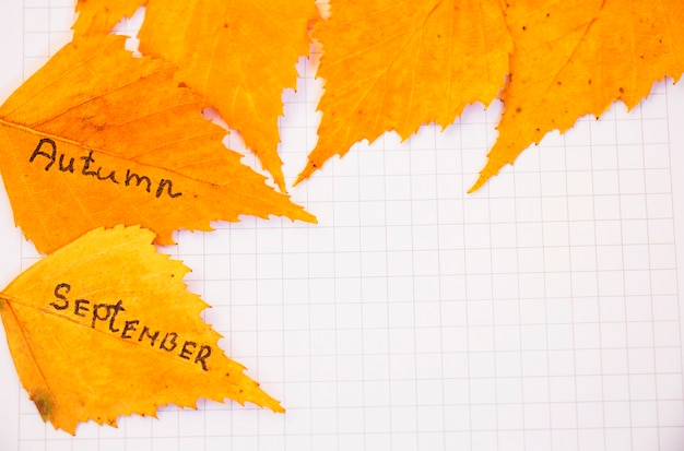 Yellow leaves with an inscription september, autumn on a piece of leaf, notepad