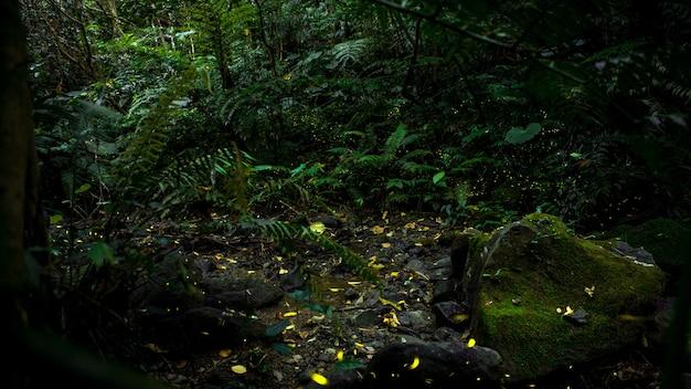 밤 숲, 대만의 배경에서 비행하는 반딧불 곤충의 노란 빛. 많은 반딧불이 타이페이 산의 나무 주위에서 춤을 추고 있습니다. 대만 반딧불이 시즌. 아름다운 자연 경관