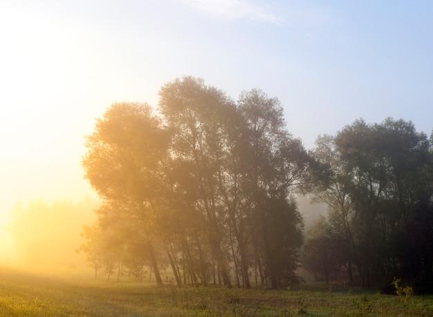 일출 동안 왼쪽 나무에 빛나는 태양의 노란 빛. 안개 중 아침 시간에 여름 풍경. 연무, 얕은 피사계 심도의 가시성 부족