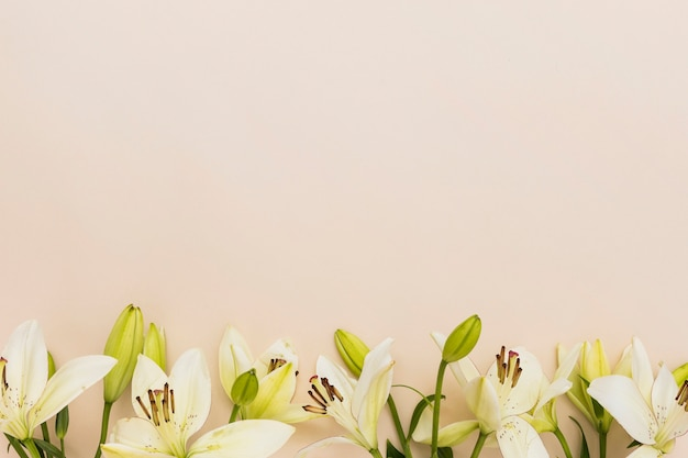 Yellow lilies on beige background