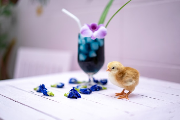 A yellow little chick with butterfly pea water and ice in a champagne glass is decorated by orchid and pandan leaf. it's shown and displayed on a pastel pink wood table in front of the cement wall.