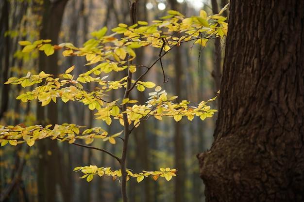 가 숲에서 노란색 작은 나무