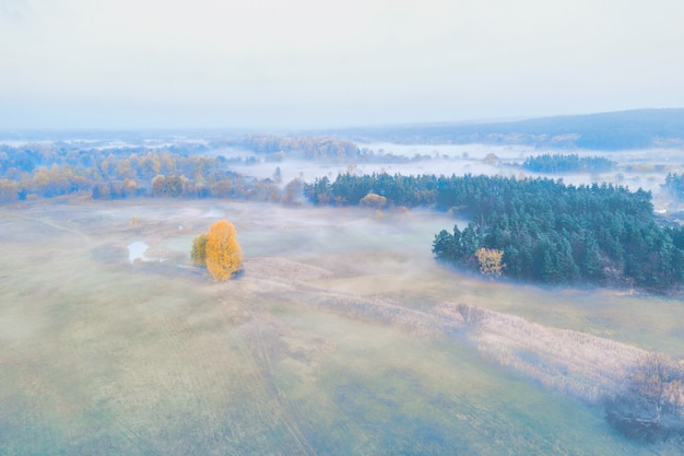 Yellow lonely tree in the middle of an autumn misty meadow near a pine forest
