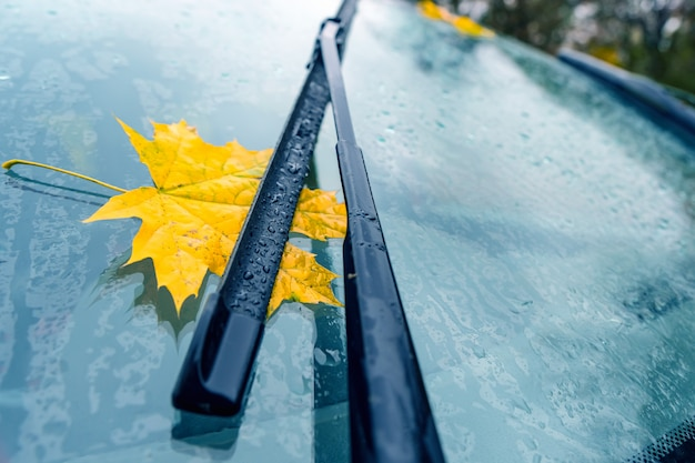 Yellow maple leaf under car wiper on windshield.