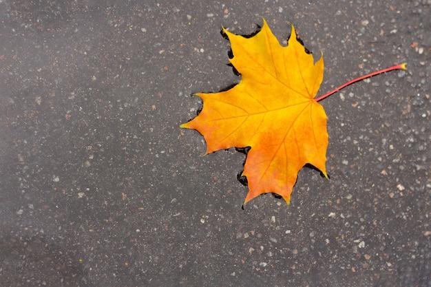 Желтый кленовый лист в луже. концепция осеннего настроения и день канады.
