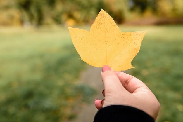 手に黄色のカエデの葉