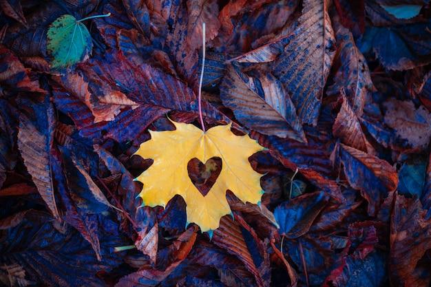 Желтый кленовый лист на земле в парке. осенняя концепция любви.