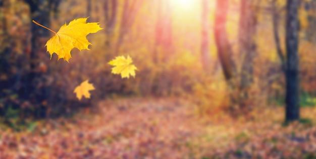 Желтые кленовые листья падают на землю в осеннем лесу. живописный осенний пейзаж с падающими листьями в теплых осенних тонах