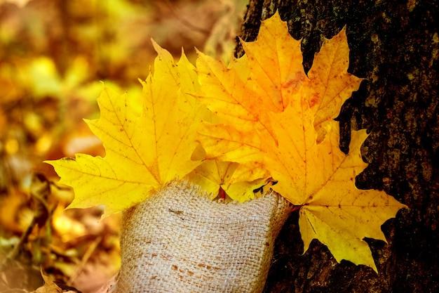 Желтые кленовые листья в декоративной сумочке возле елки в теплых осенних тонах