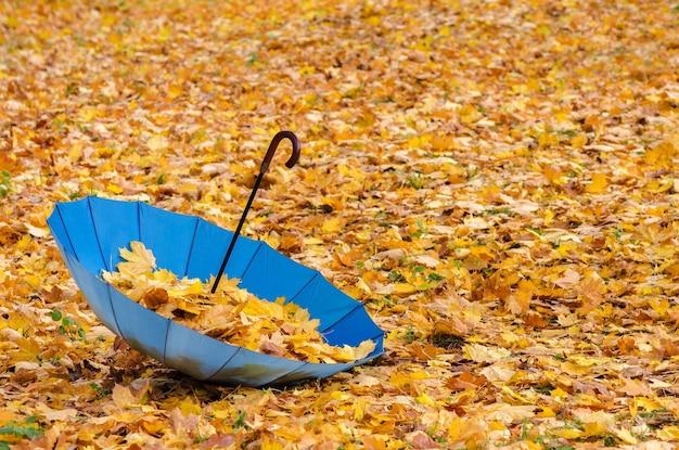 傘に黄色いカエデの葉。秋の背景