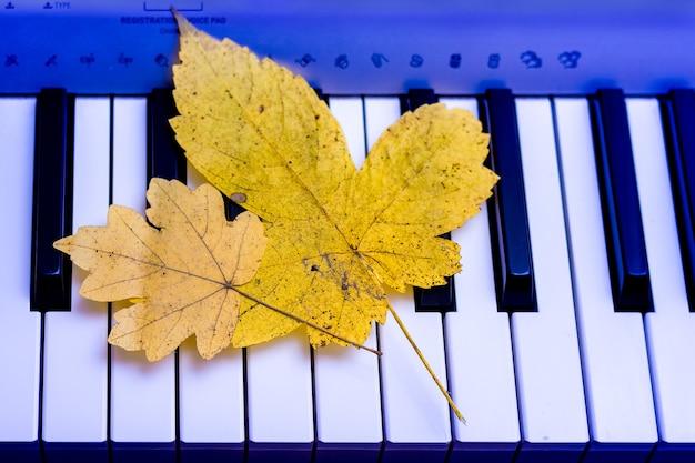 黄色いカエデの葉がピアノの鍵盤の上にあります。秋のメロディー_